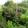 Garden 27th May 2014 007