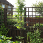 Sorbus Autumn Spire (Sorbus)