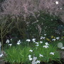 Iris Laevigata in top Pond and Tamarix Petandra with St.Francis standing guard!