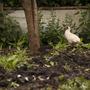In the 'Pheasant Garden'