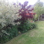 Filling out nicely (the cornus especially)