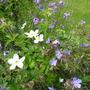 June_garden_2014_001