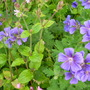June_garden_2014_002