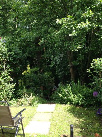 My garden 12.06.14