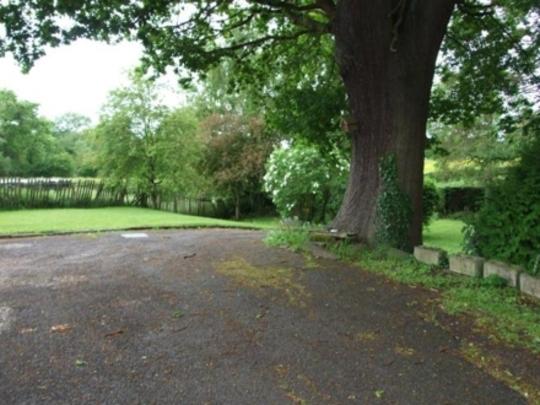 New Garden oak tree