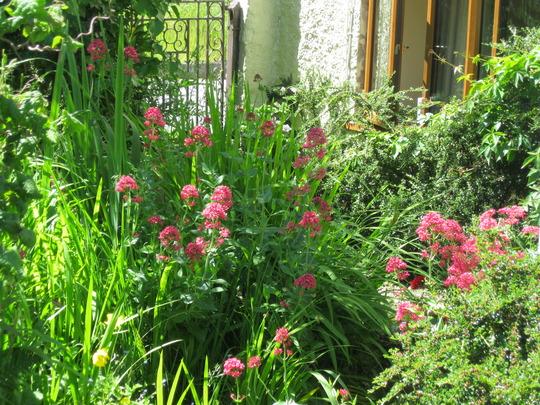 Entering our garden.