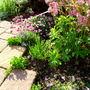 The front garden 22.06.14