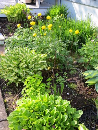 shade garden by back deck