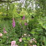 Garden_and_photo_day_090