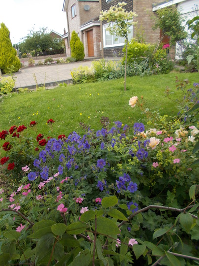 Another front garden picture
