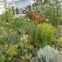 Front garden again