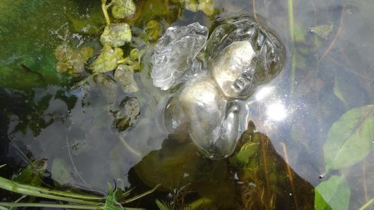 water glass birdbath ceramic