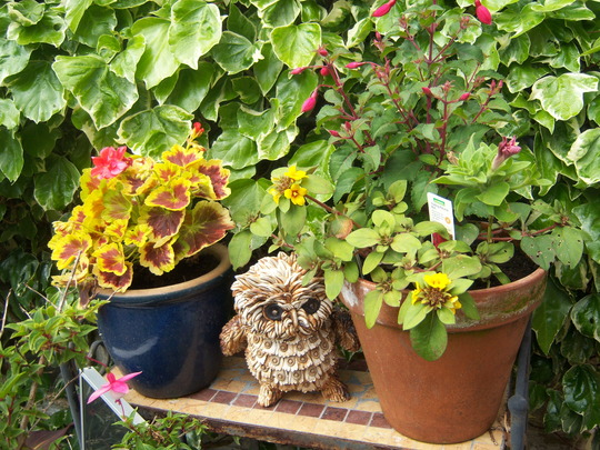 A little owl and yes more pots!