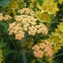 Orange_and_yellow