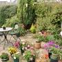 Back Garden Just Now Jun 2014