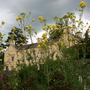 Aberglasney thru the flower bed