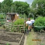 my granddaughter her friends working on my allotment