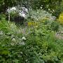 July_garden