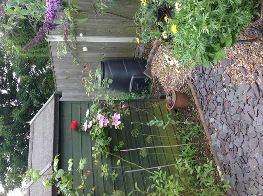 Secret garden :)