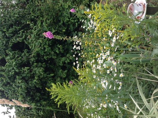 Garden gone mad!