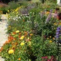 An abundance of annuals & perennials
