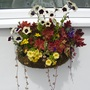 Heucheras and friends in wall basket
