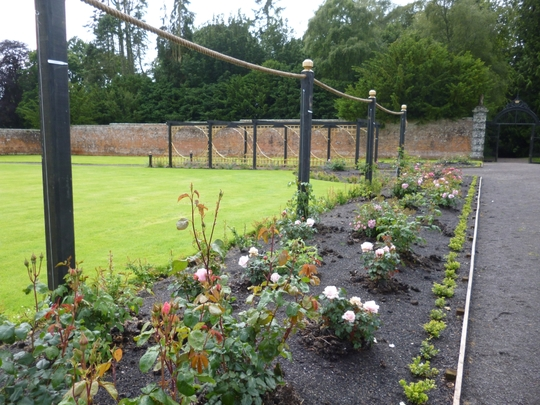 Rose bed at Glamis Walled Garden