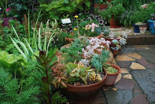 Pots in the rain....