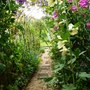 Rose_clematis_arch_..
