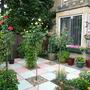 My Garden (Alstroemeria)