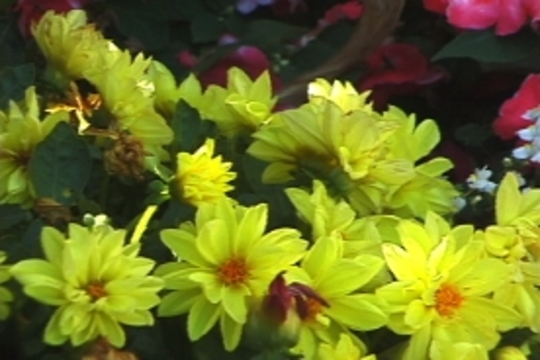 organic soil is great for flowers