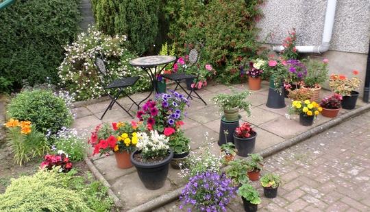 Back Garden Jul 2014 2