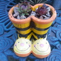 Sempervivum Boots