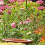 Garden_n_cricket_033