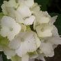 Garden_18th_july_002