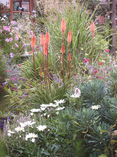 Kniphofia 'Northern Lights' and Chrysanthemum 'Little Silver Princess'