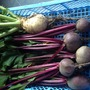 My first beetroots