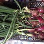 My first onions