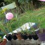 grasses repotted