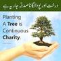 Copy_of_plant_a_tree