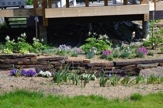 Planting around the deck