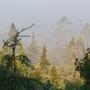 Trees_mist