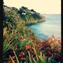 Walking the coastal path from Lelant to St Ives, Cornwall (Crocosmia x crocosmiiflora (Montbretia))