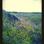 Lomogram_2014_05_18_08_52_19_pm