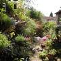 My 'wild' garden