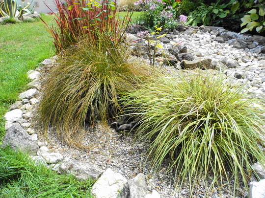 I can see your pretty little paws Lucy :o) Part - 1 (Carex oshimensis (Sedge))