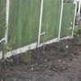 Newly planted native hedge
