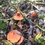 Hmmmm Fungus?