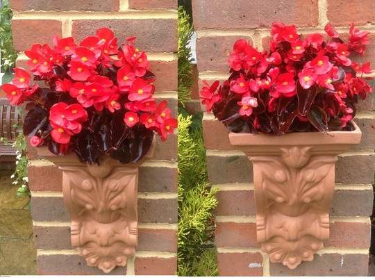 Wall planters with bedding begonias.