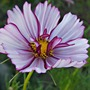 August_garden_030